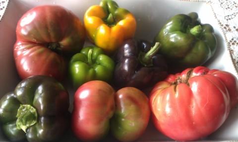 Heirloom tomatoes, beefsteak tomatoes and various peppers